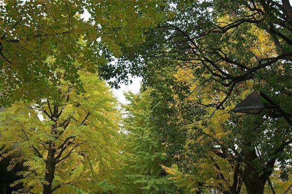 11月の上野公園