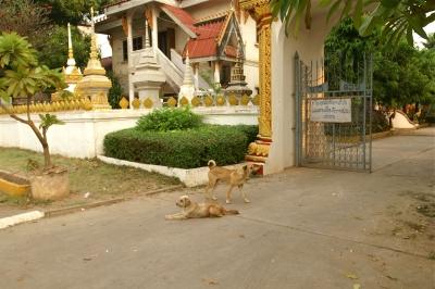 シエンヌン寺院のワンちゃんたち