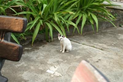 ホテルで何度か見かけた猫ちゃん