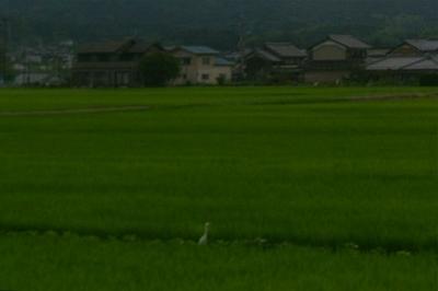 光る山と白鷺(拡大)