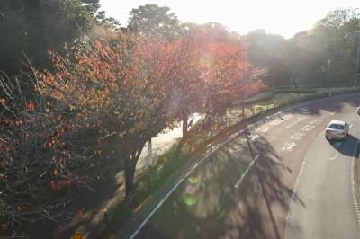 とある秋の日の光と影2
