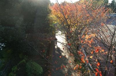 とある秋の日の光と影3