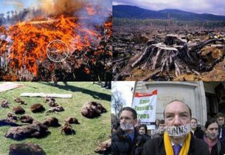 090129違法伐採による環境破壊