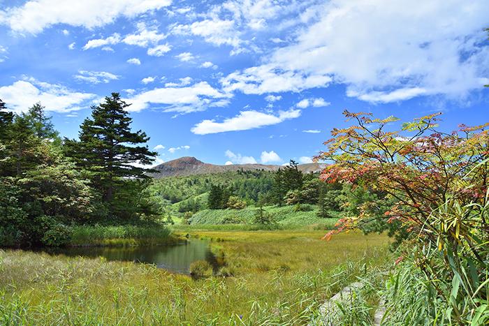 芳ヶ平湿原
