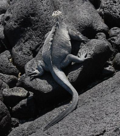 m-iguana5
