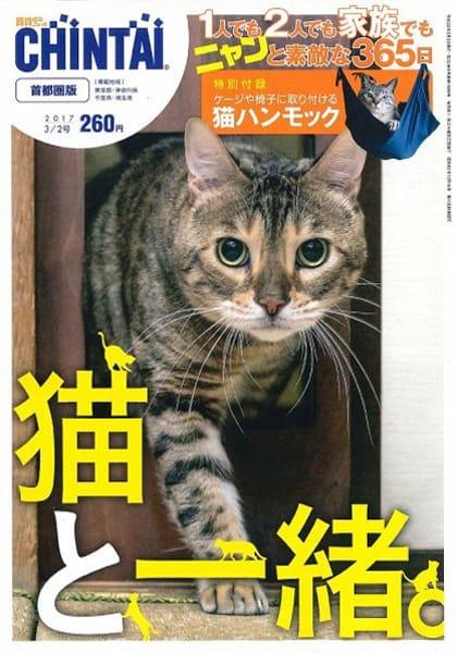雑誌「CHINTAI」