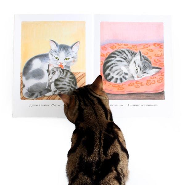 猫 子猫 絵本 むたろう