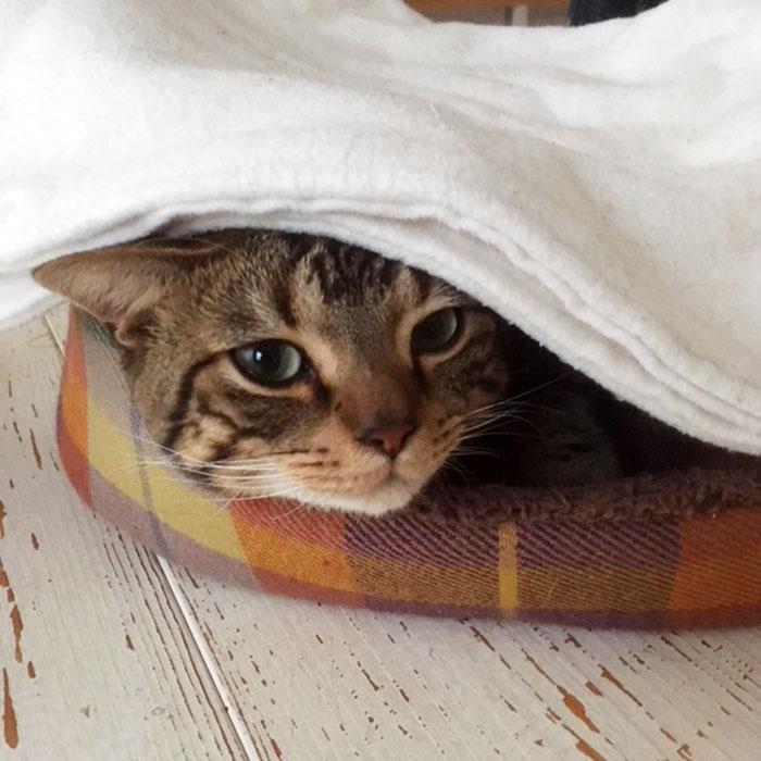 寝袋毛布 スリーピングバッグ