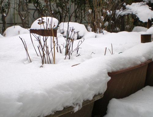 元旦の雪の庭
