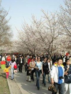玉淵潭の桜花園