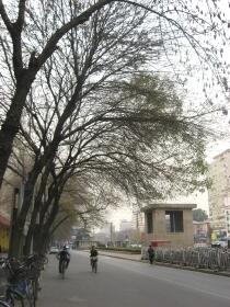 崇文門の街路樹