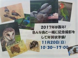 2016-11-20-ic-2.jpg