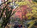 鶏足寺の紅葉1