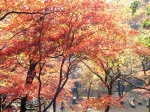 鶏足寺の紅葉2