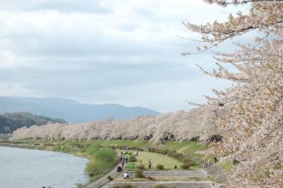 夕日に映える桧木内川堤