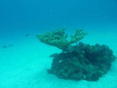 竹富島大仏の根