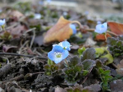 春待ちの青