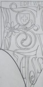 アルプスの花といえば・・・の「エーデルワイス」は、こんな感じ。