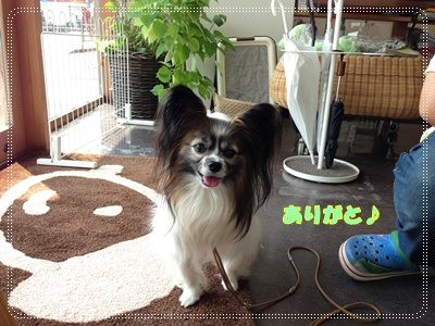 IMG_4579-1.JPG