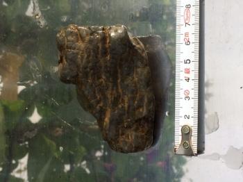 ミニ盆栽の石