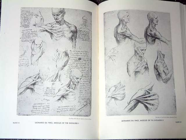AN ATLAS OF ANATOMY FOR ARTISTS | Ghost Wip