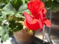 6月の花2