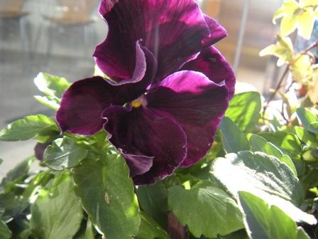 2月の花2