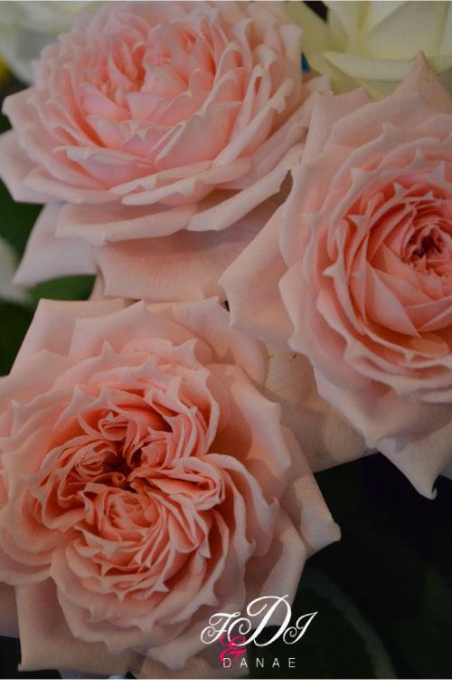 ピンクのバラが.jpg