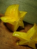 Star Fruits 02