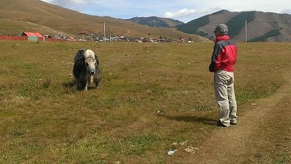 牛と人生を語り合うリーダー