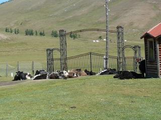 門番は牛?