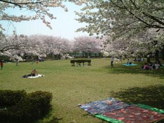 桜-東小菅1