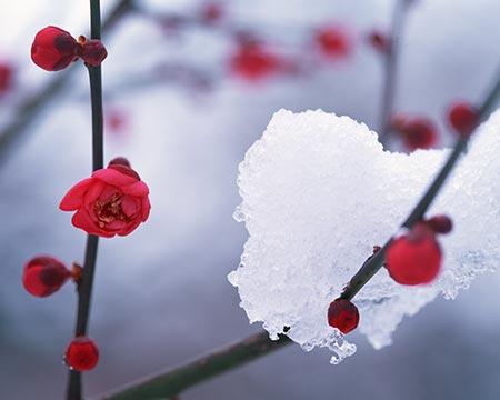 新春のイメージ
