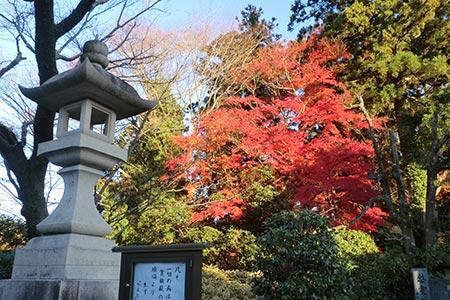 成田山でも紅葉が見事でした
