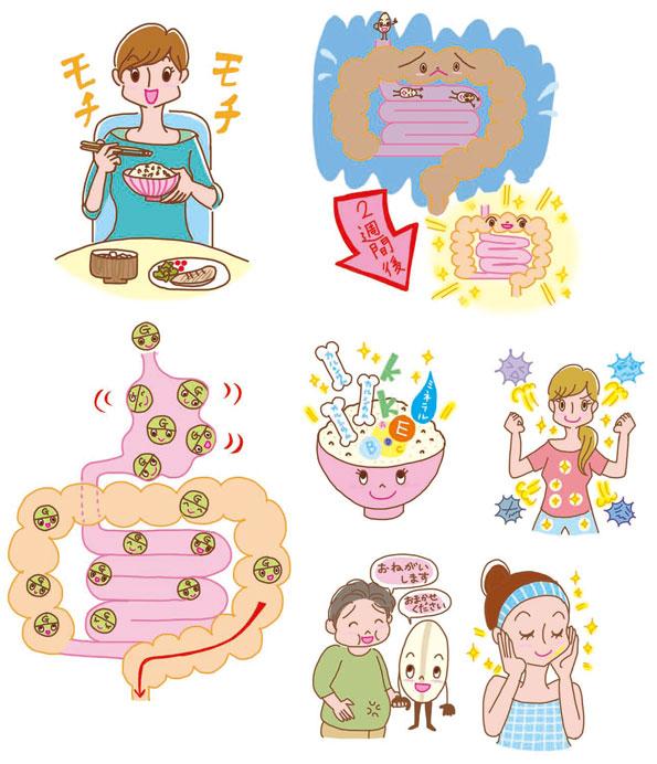 KADOKAWA 発刊 書籍『2週間で体が変わる「もち麦」ダイエット」美容イラスト,健康イラスト,もち麦イラスト