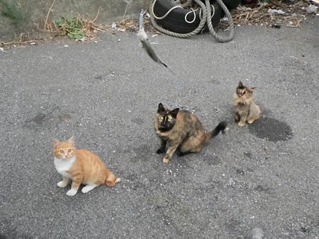 キチンと整列する可愛いネコちゃんたち