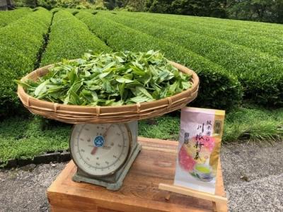 生葉の量と茶葉100g