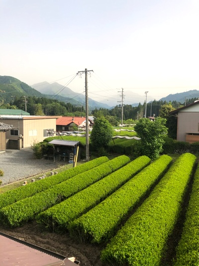 2020年川根新茶2