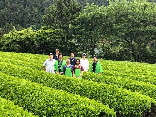 2020年 川根新茶3
