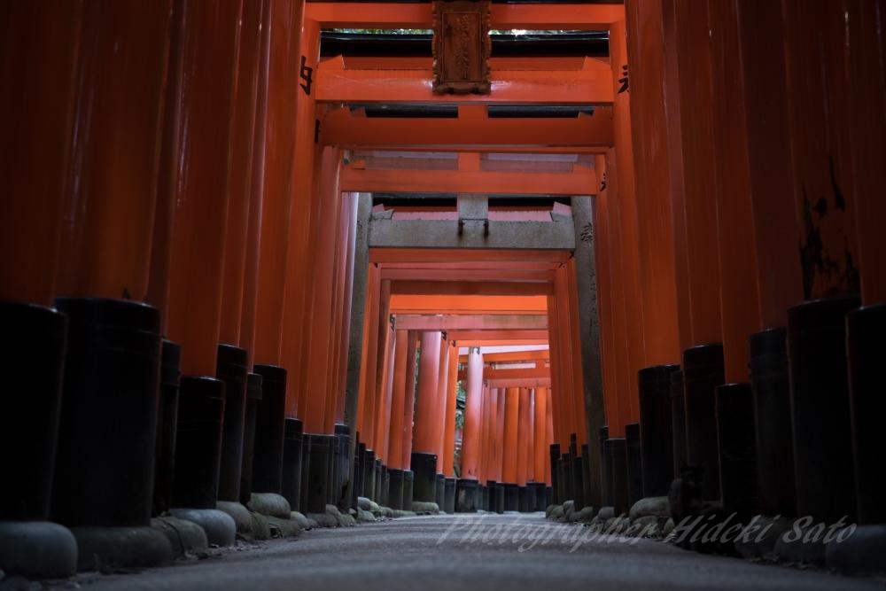 京都,伏見稲荷大社,千本鳥居