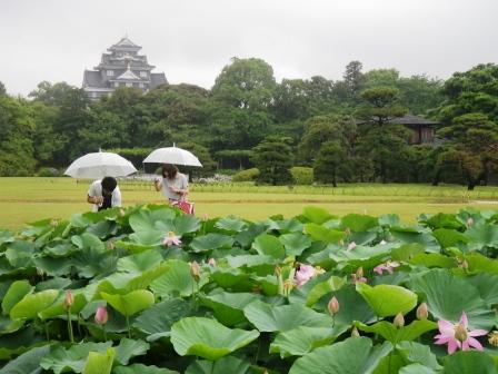 珍しく大雨の後楽園