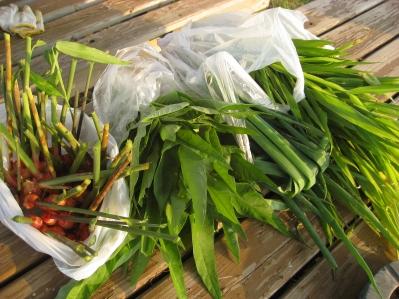 生姜、空芯采、生姜の葉っぱ