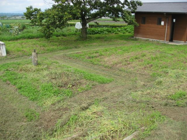 農園はきれいに刈っていました