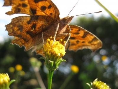 蜜を吸う蛾
