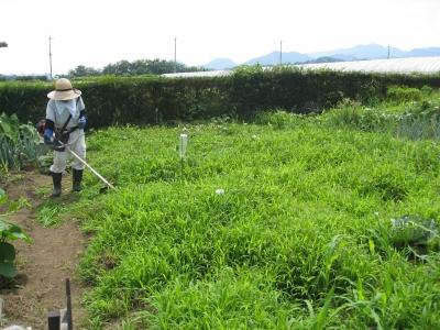 中村さんに草を刈ってもらう