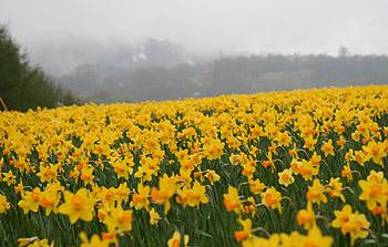 H18.05.12 みやぎ蔵王えぼしスキー場