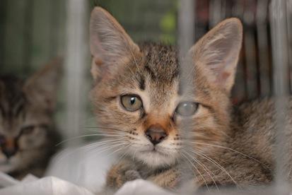 120722挿絵の子猫