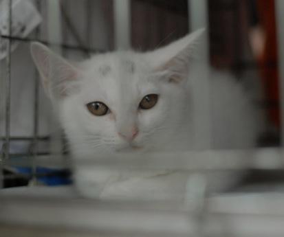 白子猫NY120722