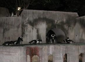 去年のナイト上野のペンギン君