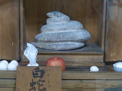 鹿野山神野寺宝物館に所蔵される白蛇。